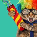 Celebration cat